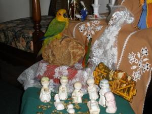 parrot at play