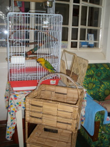 parrot at play on cage
