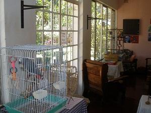 Birds on the veranda