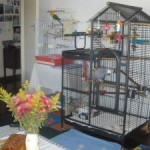 Parrot Playing On Cage