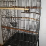 Bare parrot's Cage