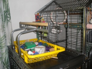 Parrot Toys in Plastic Container